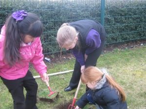 Tree planting 002